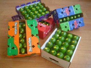 90922-Persion lime - photo Veca Produce Mexico resize