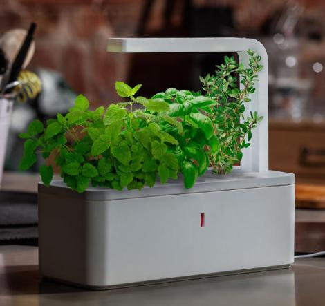 LED lighting is increasingly utilized to grow plants as a more environmentally friendly way of gardening