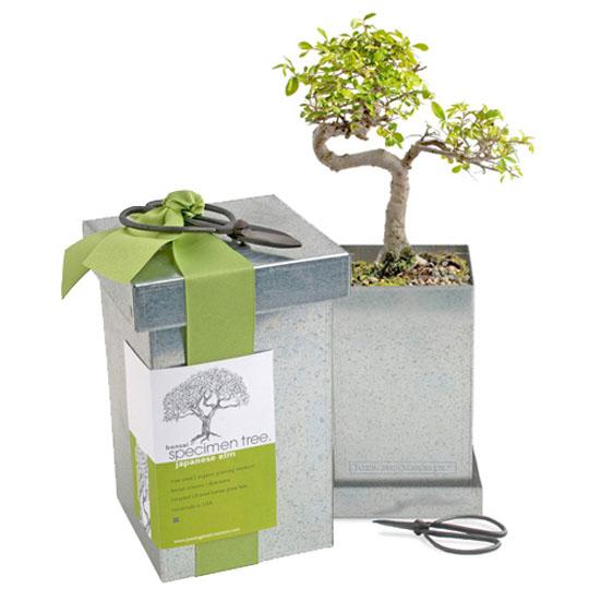 150193-bonsai gardens-W540 100dpi