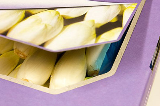 150327-Resealable Belgian endive box to improve shelf life eosta4-W540 100dpi