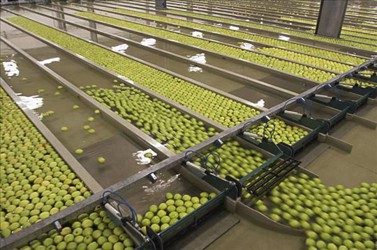The fruit and vegetable industry typically generates large volumes of effluents and solid waste. The effluents contain high organic loads, cleansing and blanching agents, salt and suspended solids such as fibers and soil particles.